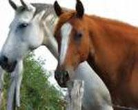 20070627010027-caballos.jpg