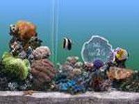 20080111233326-peces.jpg