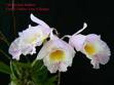 20080316164631-orquidea.jpg