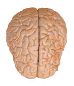 20091203190050-cerebro.jpg