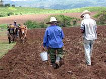¿QUIÉN ABONA LA AGRICULTURA HABANERA?
