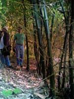 CREAN FRANJAS FORESTALES EN ZONA ORIENTAL