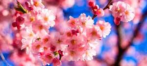 20170322041727-primavera.jpg